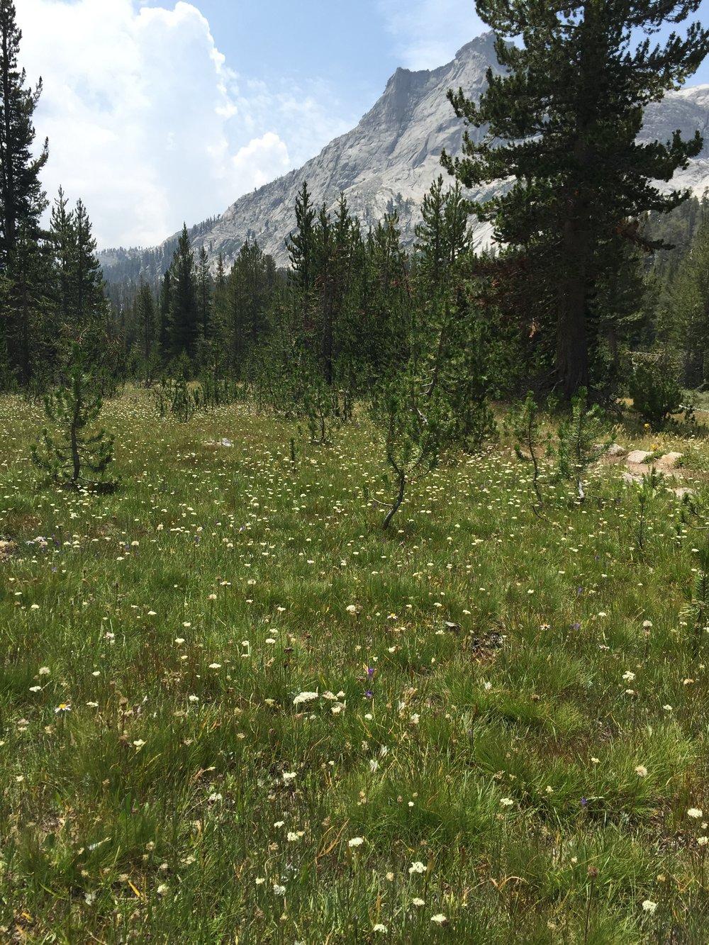 Endless wildflowers