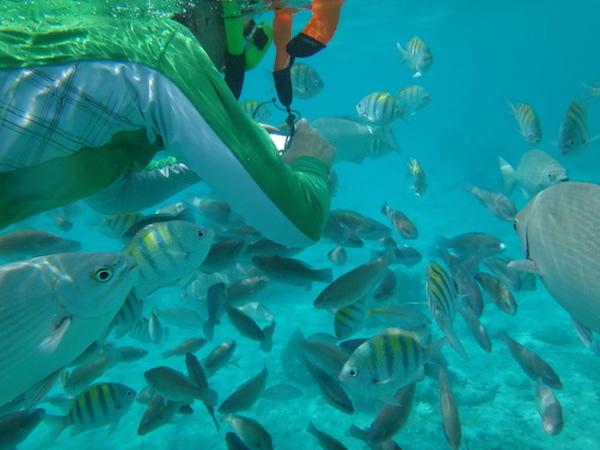 Cuba Adventure Company snorkeling