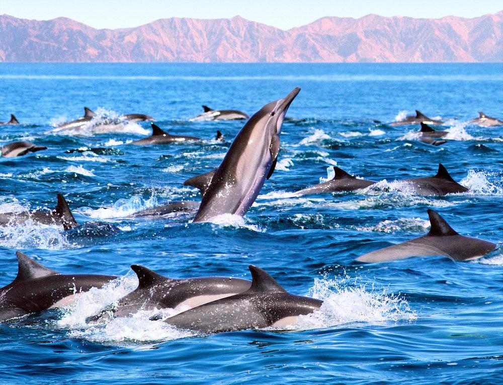 bigstock-Dolphin-Patrol-2887027.jpg