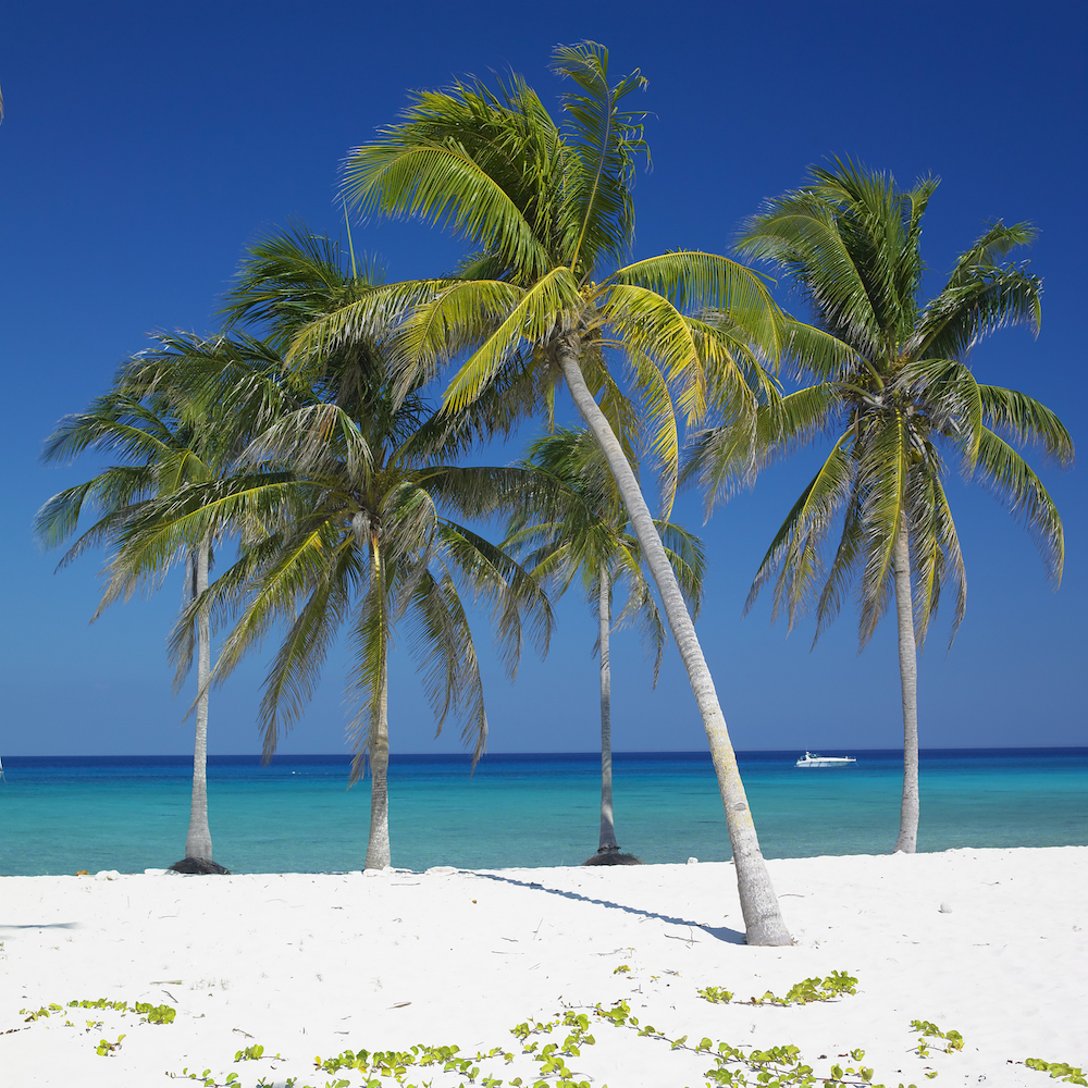 Cuba Adventure Company Travel To Cuba