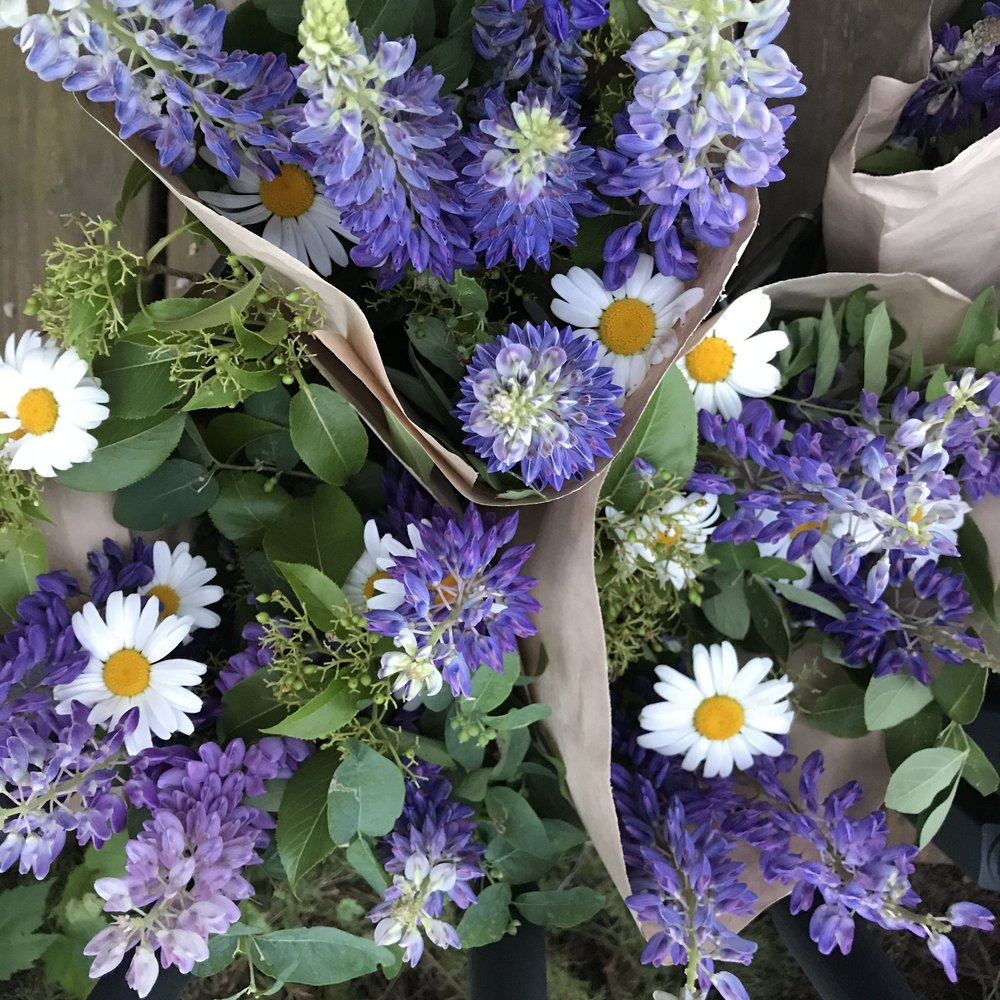 Lupine, daisy, and bush honeysuckle bouquets at en early farmers' market