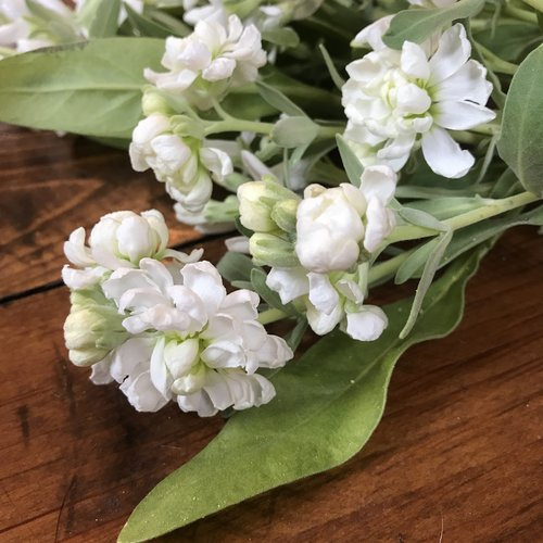 Fragrant flowers little farmhouse flowers vintage white stock mightylinksfo