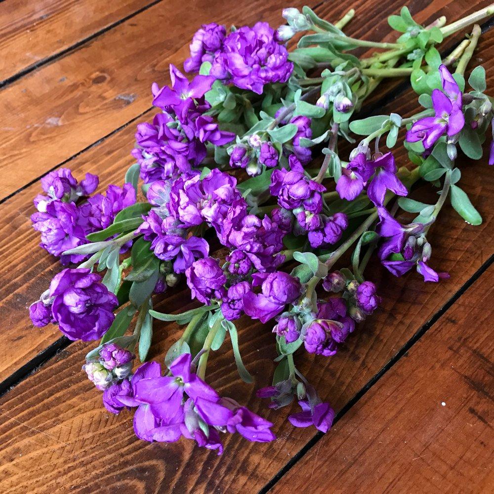 Vintage Lavender Stock