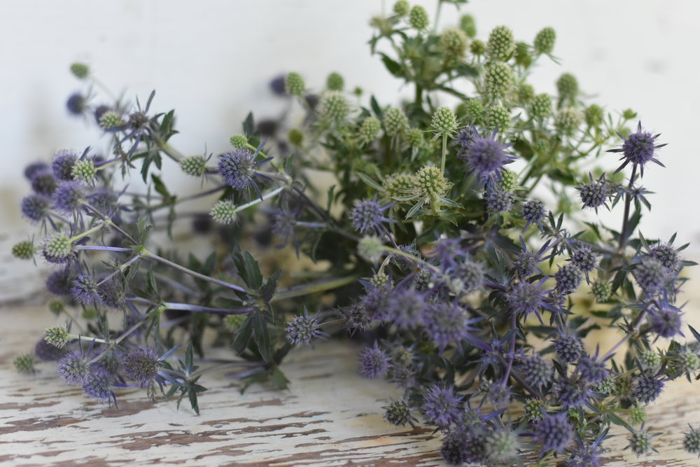 Blue and White Glitter Sea Holly