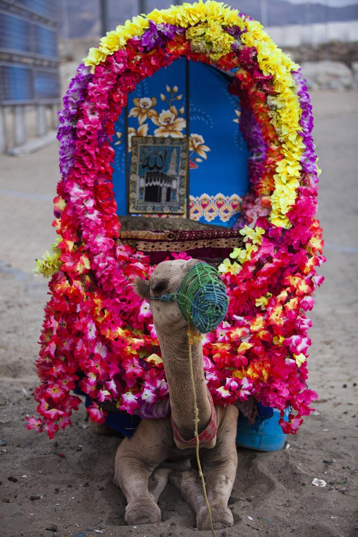 spring camel 01h.jpg