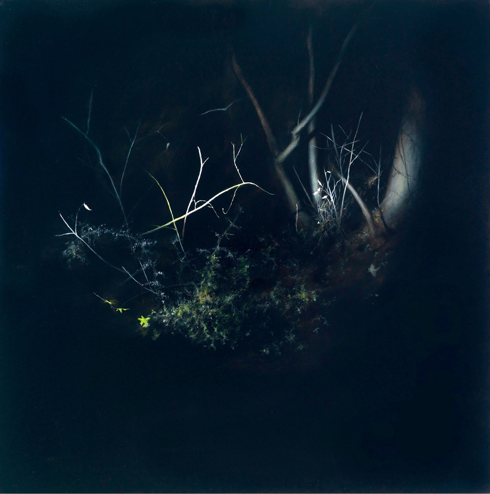 Night Forest 1