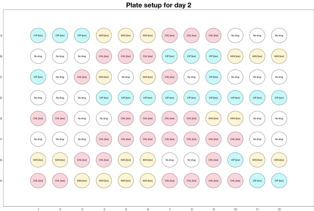 Plate setup for day - 2.jpg