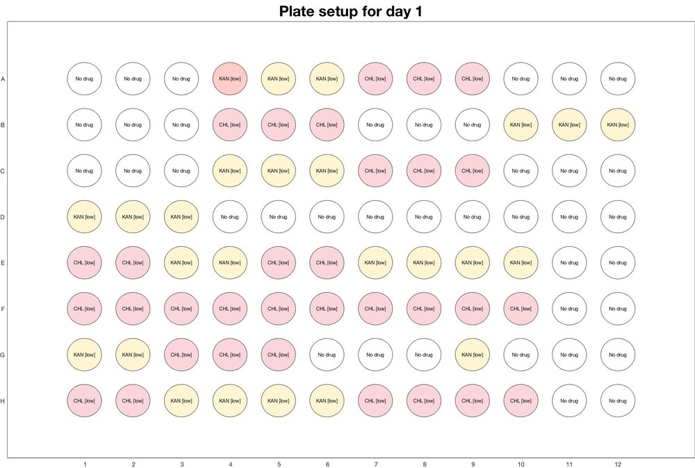 Plate setup for day - 1_adjusted_for_CIP_death.jpg