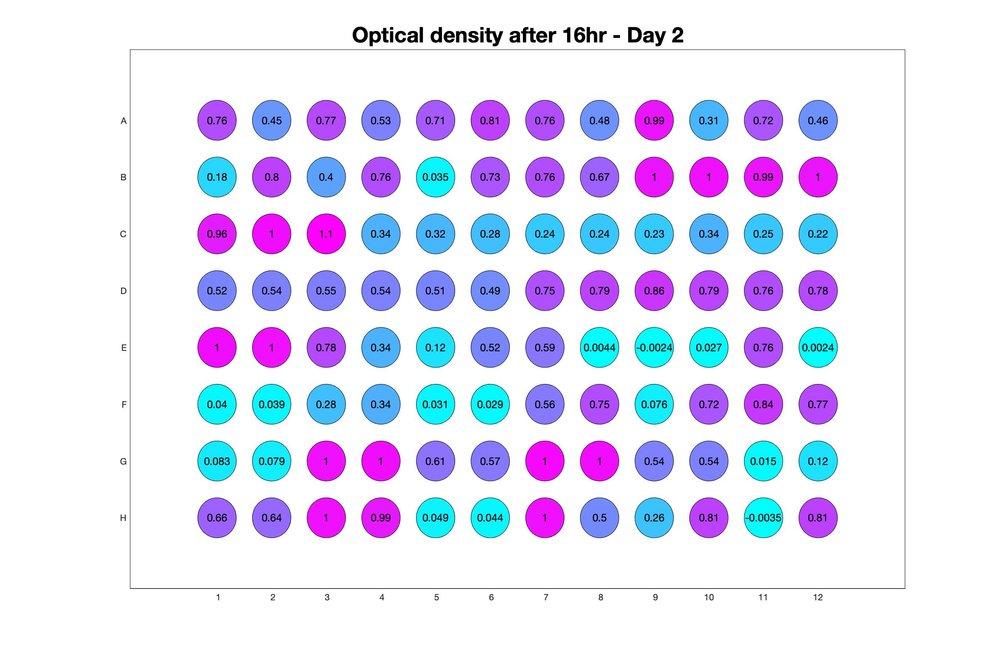 Optical density after 16hr - Day 2.jpg