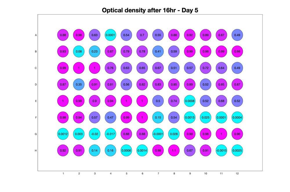Optical density after 16hr - Day 5.jpg