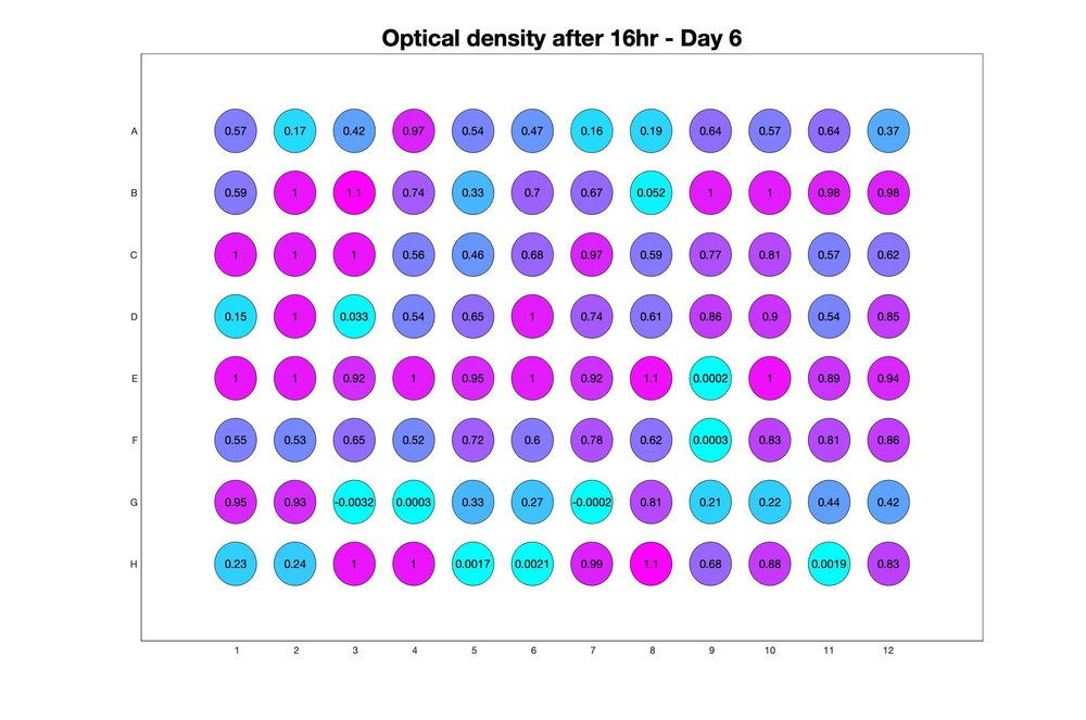 Optical density after 16hr - Day 6.jpg
