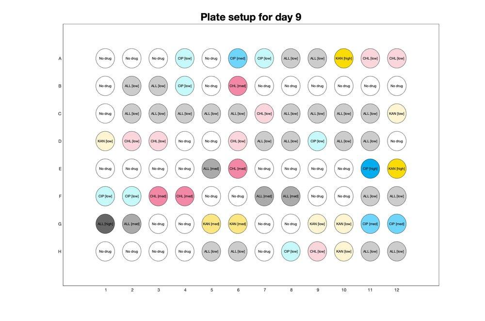 Plate setup for day - 9.jpg