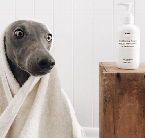 """We now ONLY use Mr.PAW to keep Ziggy clean! Love that it is all natural and great on sensitive whippet skin. Also a plus is that it smells great and we love the packaging"" - Kate & Ziggy the Whippet, Perth."