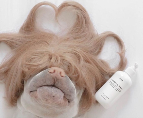 """Feeling beautiful thanks to Mr.PAW. A great shampoo find for our sensitive friends."" - Annie & Paddington the Sharpei, Tasmania."