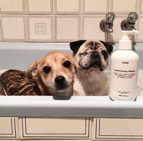 """We are so happy to have found Mr.PAW! Our mammy only buys products that are vegan and cruelty free! It is so gently on our skin and we are so shiny and soft after our baths."" - Leah, Wasabi the ""little bit of everything"" and Cheese the Pug, Melbourne."