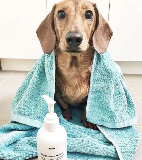 """Just wanted to say how much I love your shampoo/conditioner! It really calmed Fritz down during his bath, which is usually a real drama!"" - Danni & Fritz the mini Dachshund, Melbourne."