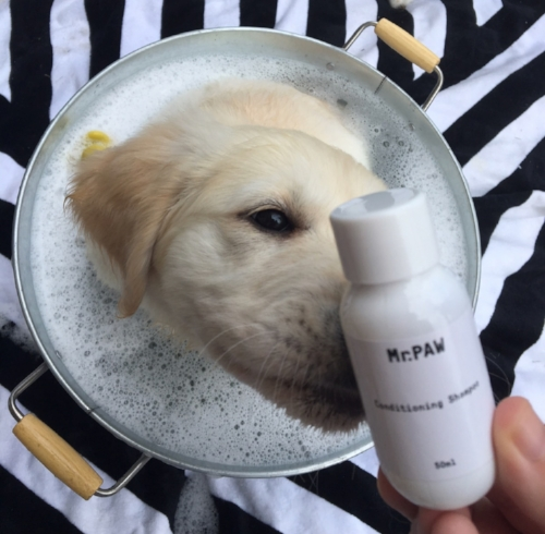 """Mama love love loves this shampoo. I am all fluffy and clean plus I smell amazing!""  - Rebecca & Alaska the Golden Retriever pup, Brisbane."