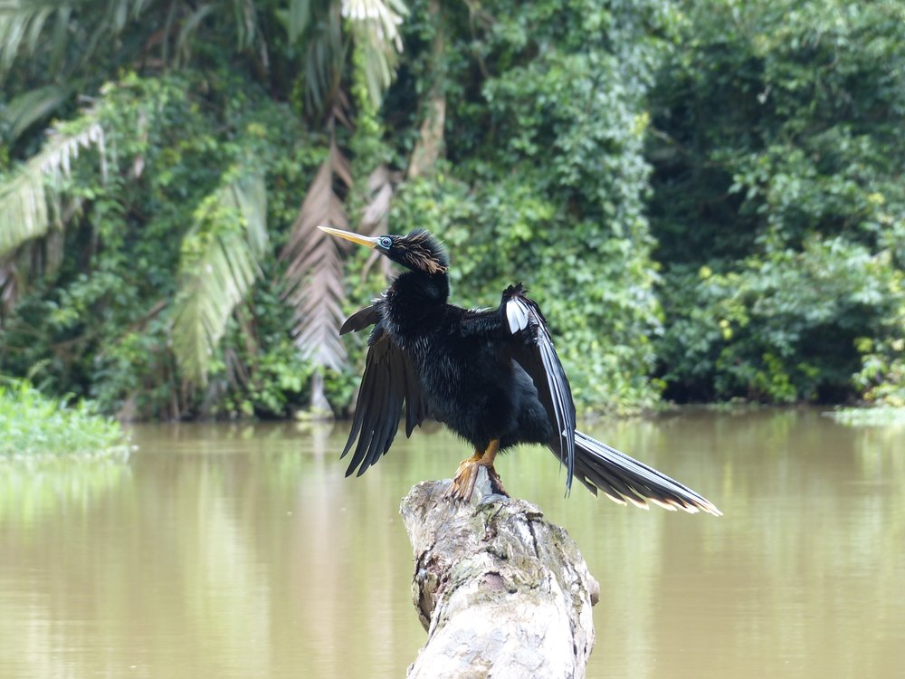 wildlife voyedge rx costa rica
