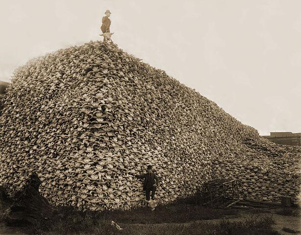 Bison Skull Pile -Burton Historical Collection, Detroit Public Library