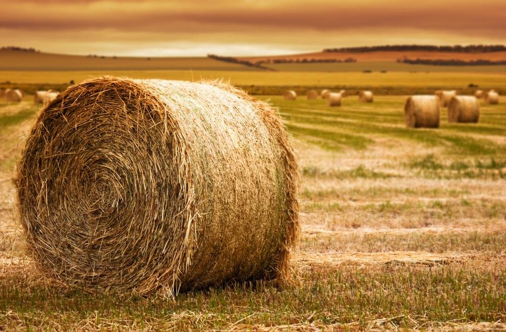 hay.jpg