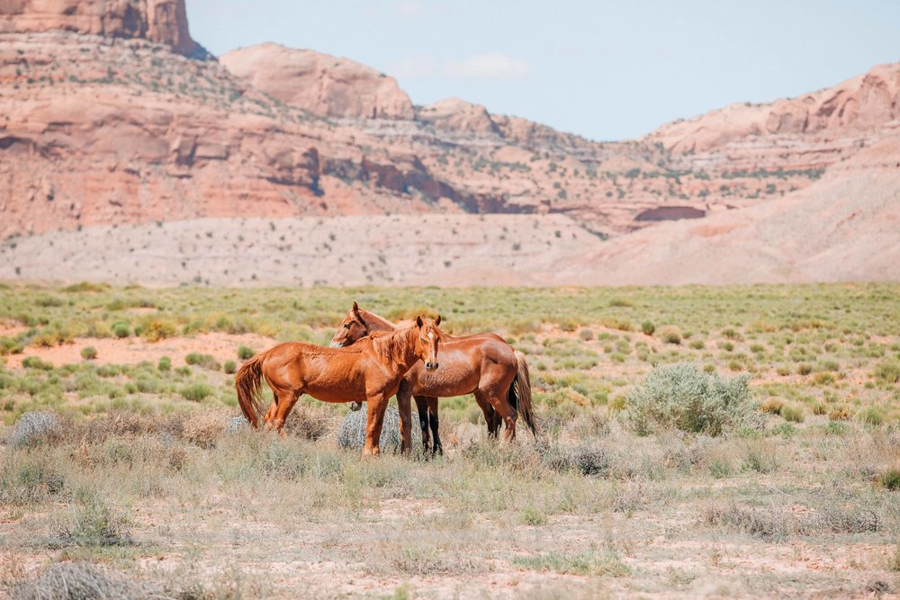 Wild mustangs roam free in Monument Valley.