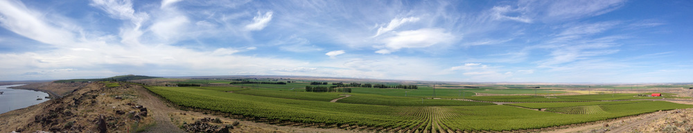 Destiny Ridge Vineyard Panorama