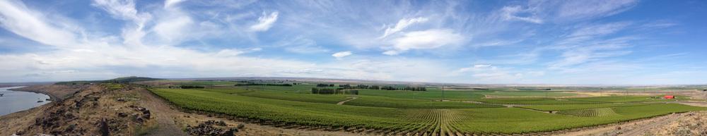 Destiny Ridge Vineyard Panorama