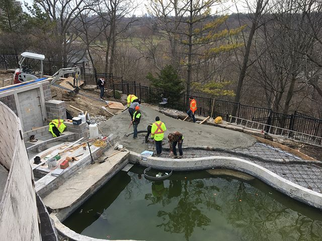 The team working hard to get this back yard ready for stonework! @npmtoronto even stopped by to make sure we were doing it the right way! Next step is installing the custom cut pool copping so we can start on the main patio stonework. . . . . . #construction #landscaping #landscapingthe6ix #pouringthe6ix #concrete #concretepour #toronto #highend #concrete #teamwork
