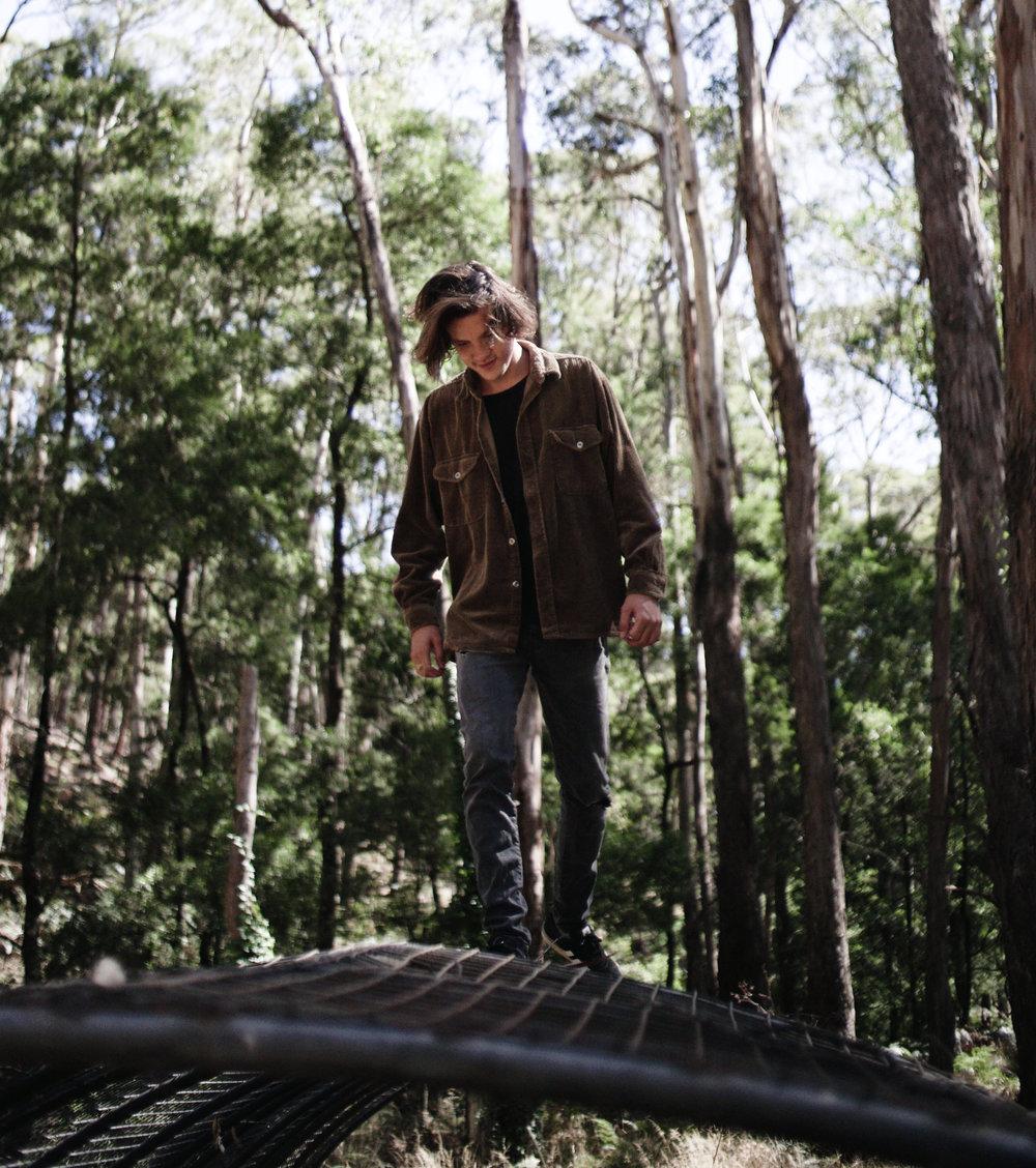 forest_albertgray_25031803.jpg