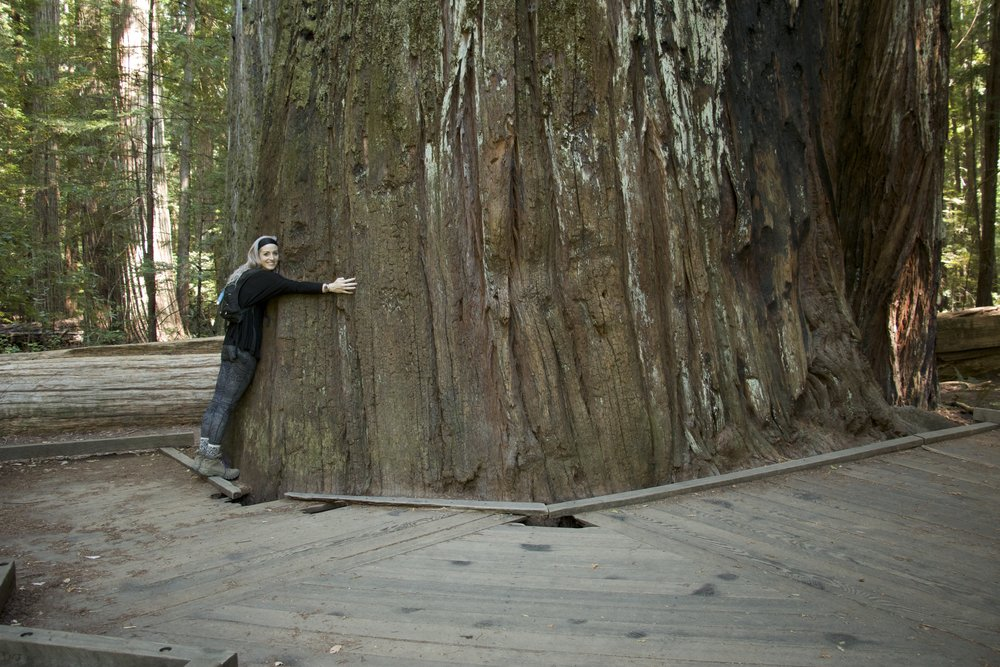 "Visiting ""Giant Tree"" in Rockelfeller Forest. ""Not the tallest redwood, but this specimen in Humboldt Redwoods State Park is pretty much the best in show. Designated the National Champion Coast Redwood for having the best combination of height, diameter and crown spread, it could be dubbed Big Beauty. Perhaps the largest redwood in terms of mass, it is in the park's Rockefeller Forest, the world's largest stand of old growth redwoods, 10,000 acres!"" (Source:  Redwood Info )"