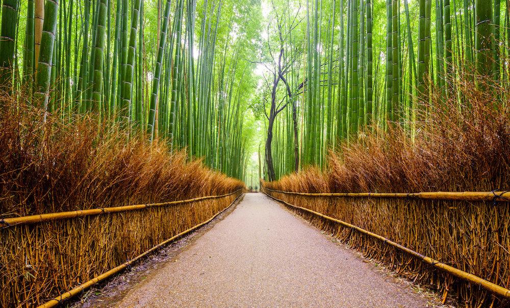 bamboo image small.jpeg
