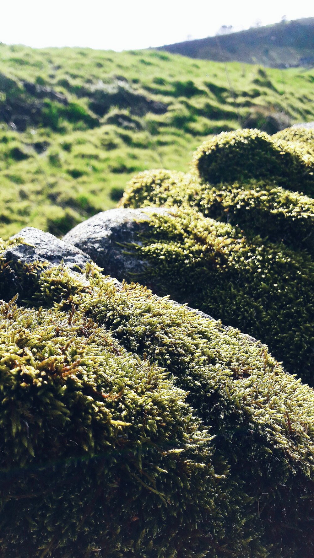 Moss on stone wall in Hollinsclough Village