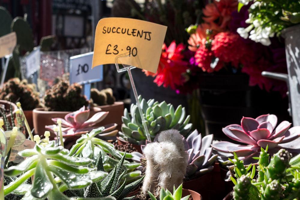 Succulents, Altrincham Market, Manchester