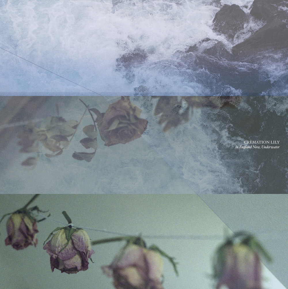 CREMATION LILY - IN ENGLAND NOW, UNDERWATER.jpg