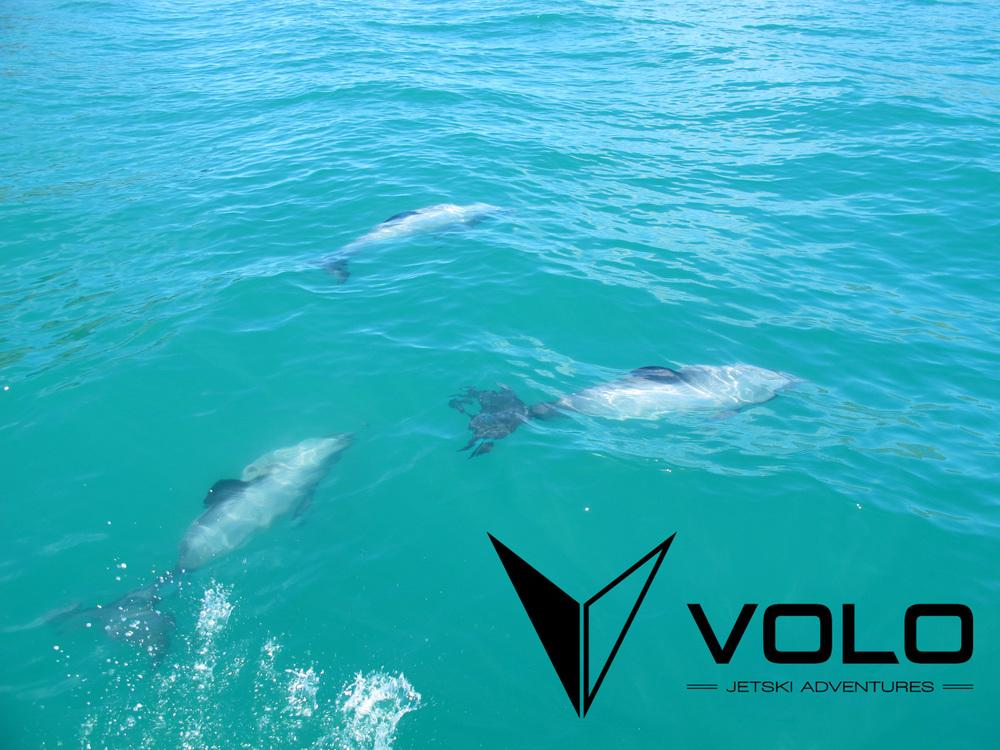 Campermate image dolphins.jpg