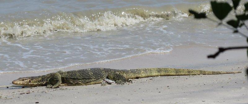 Iguana - lizard like thing - Maybe a Monitor Lizard