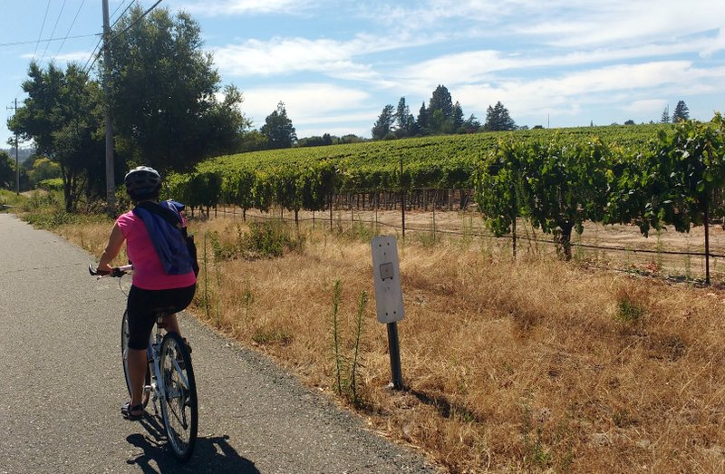 Cycling among the Russian River vineyards