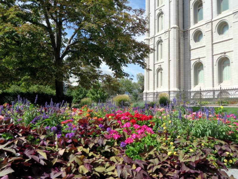 Whatever you think of Mormons, they plant a good garden!