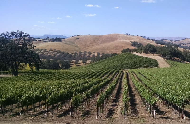 Paso Robles or Tuscany?