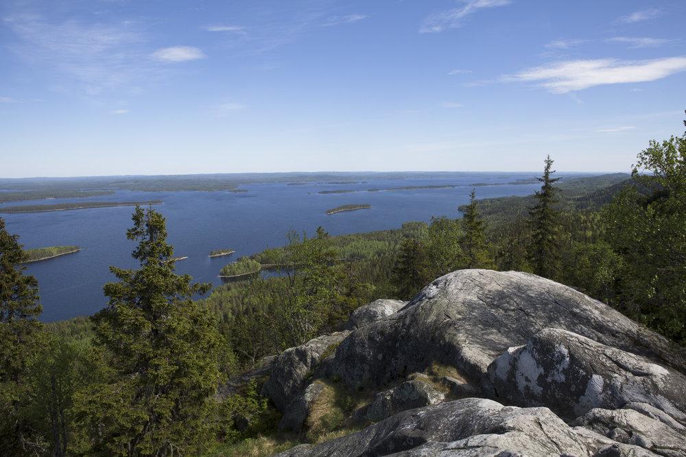 wildlife finland