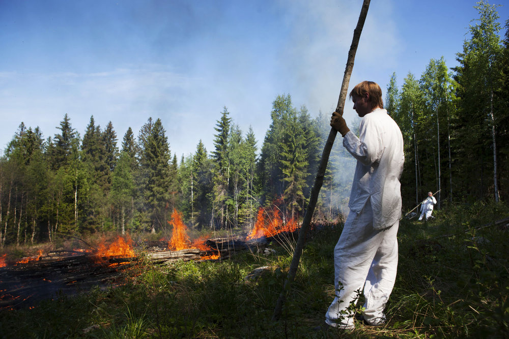 burning vegetation