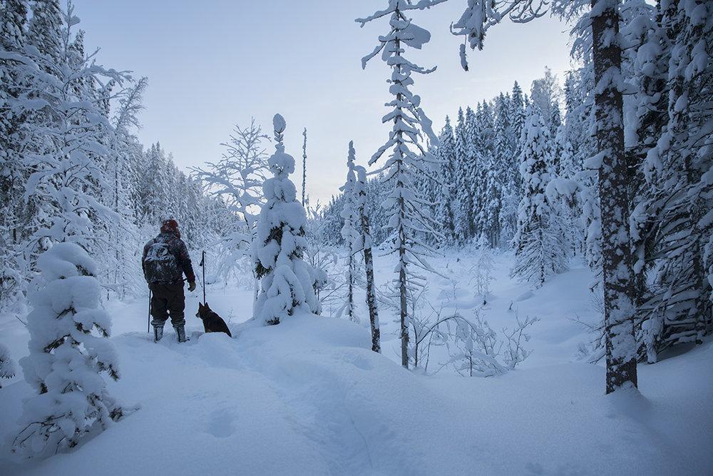 Hiihto Pohjois-Karjala