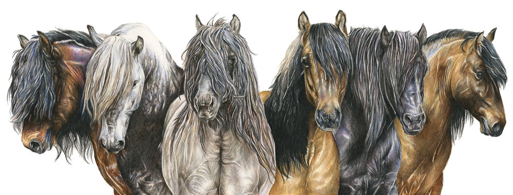 Highland Stallions