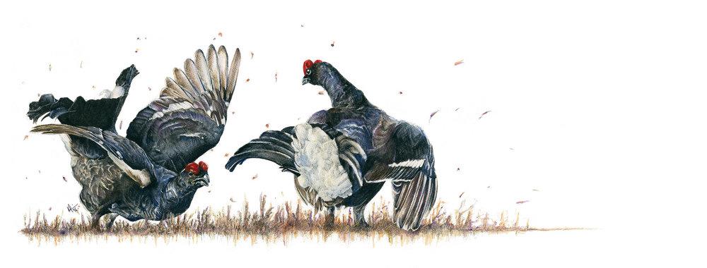 Featherweights