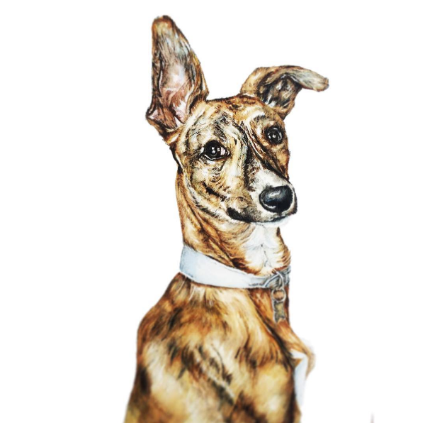 Beautiful Pet Portraits by Kate Simpson