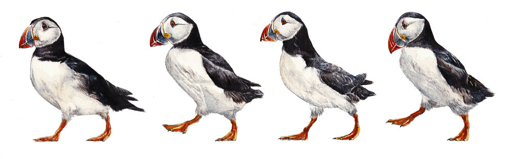 "The four characters... ""Puffin Crossing"" a new painting for this month"