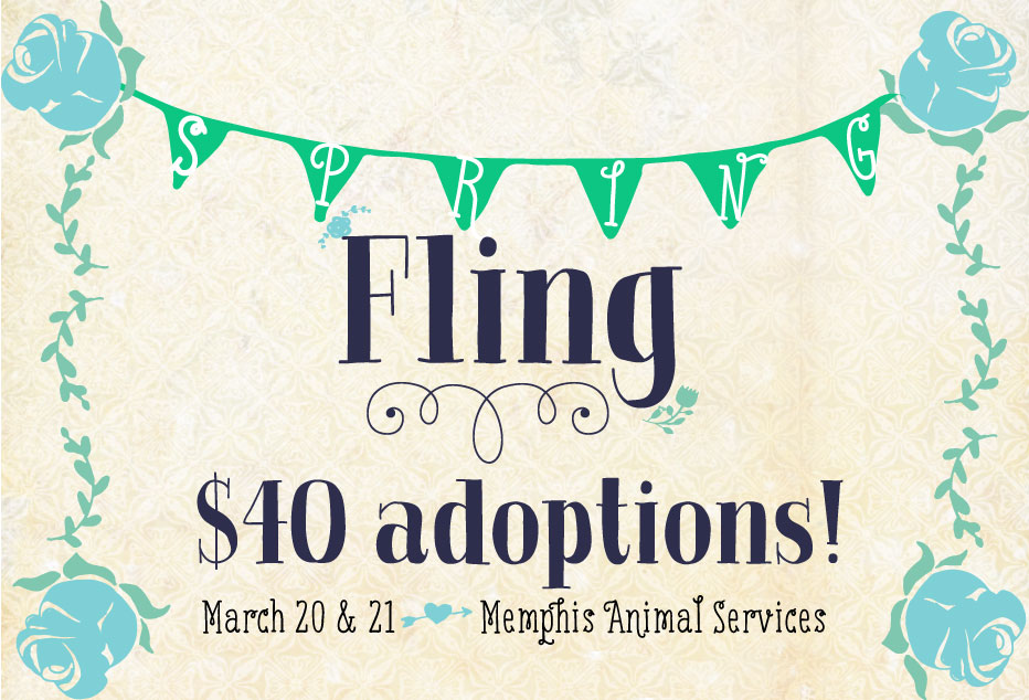 adoption special at Memphis Animal Services