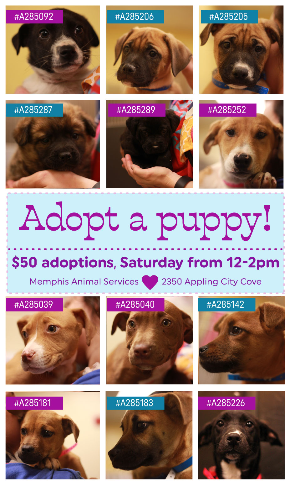 puppy adoption graphic