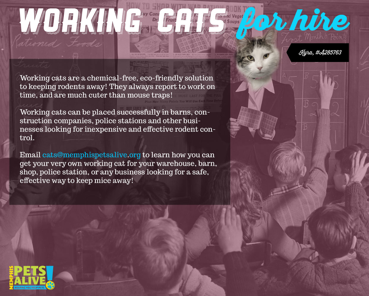 working cat design by Beth Spencer