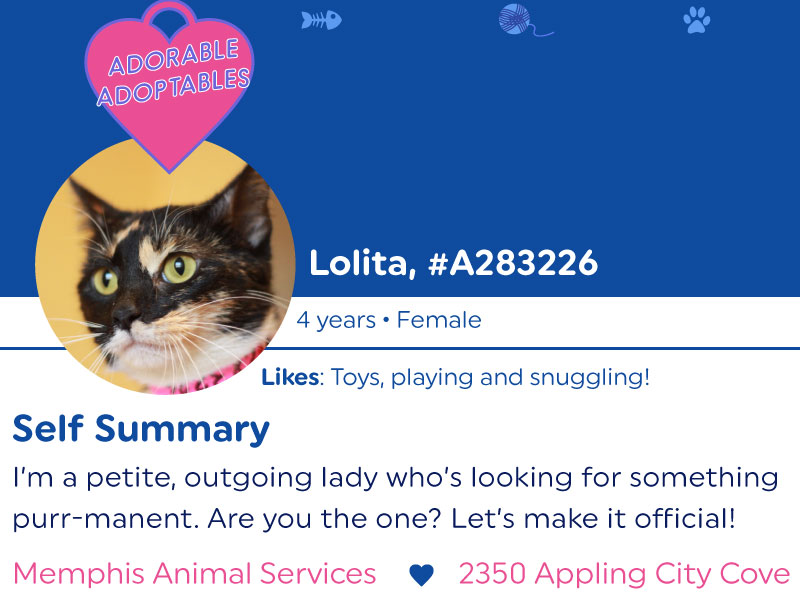 One of many pretend dating profiles for pets at Memphis Animal Services. These premiered around Valentines Day, and were a huge hit!